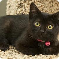 Adopt A Pet :: Lyndsi - Great Falls, MT