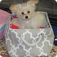 Adopt A Pet :: Peaches - San Diego, CA