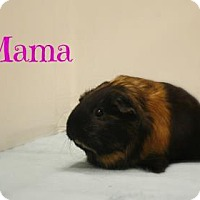 Adopt A Pet :: Mama - West Des Moines, IA