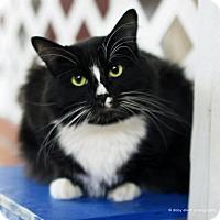 Adopt A Pet :: Bayou - Tucson, AZ