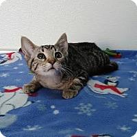Adopt A Pet :: Zoey - China, MI