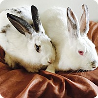 Adopt A Pet :: Holly & ivy - Bonita, CA
