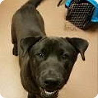 Adopt A Pet :: Stallone 6084 - Columbus, GA