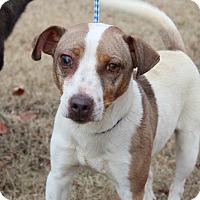 Adopt A Pet :: One Eyed Jack - Harmony, Glocester, RI