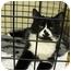 Photo 2 - Domestic Mediumhair Cat for adoption in Mission, British Columbia - Splash