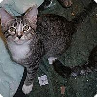 Adopt A Pet :: Winnie - Stafford, VA
