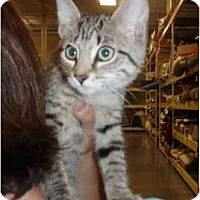 Adopt A Pet :: Sasha - New Egypt, NJ