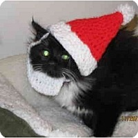 Adopt A Pet :: Eve - Catasauqua, PA