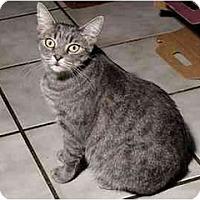 Adopt A Pet :: Lainie - New Port Richey, FL