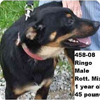 Adopt A Pet :: I.D. # 458-08 - RESCUED! - Zanesville, OH