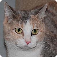 Adopt A Pet :: Roxanne - Edmonton, AB