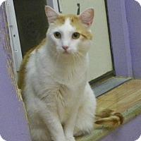 Adopt A Pet :: Scotchie - Dover, OH