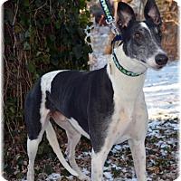 Adopt A Pet :: Jinks - Harrisburg, PA
