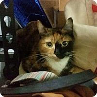 Adopt A Pet :: Calliope - Brooklyn, NY