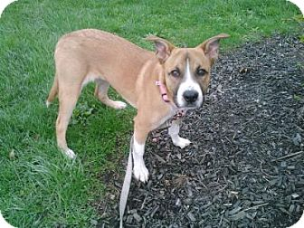 Hound (Unknown Type) Mix Dog for adoption in Dublin, Ohio - Gertie