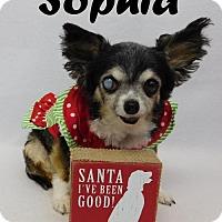 Adopt A Pet :: Sophia - Arcadia, FL