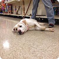 Adopt A Pet :: Snowflake - Delaware, OH
