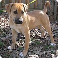 Adopt A Pet :: Susie - Bedminster, NJ