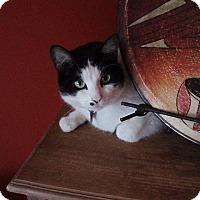 Adopt A Pet :: Smartie *declawed* - Toronto, ON