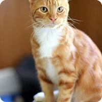 Adopt A Pet :: Ryan - Dalton, GA