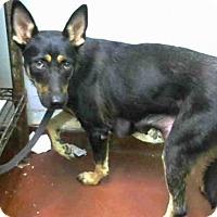 Adopt A Pet :: ROBIN - Atlanta, GA