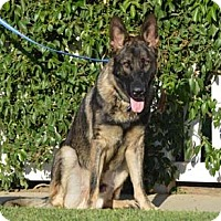 German Shepherd Dog Dog for adoption in Downey, California - Sterling