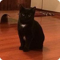 Adopt A Pet :: Chopper - Lockport, NY