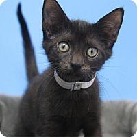 Adopt A Pet :: Sadie - Hawthorne, CA