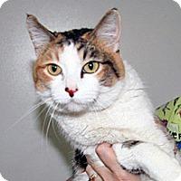 Adopt A Pet :: Cali - Wildomar, CA