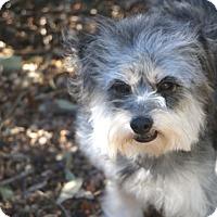 Adopt A Pet :: Devon - Allentown, PA
