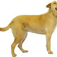 Adopt A Pet :: Angel - Inverness, FL