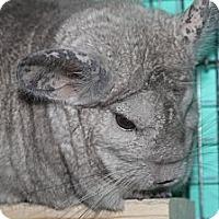 Adopt A Pet :: Max - Titusville, FL