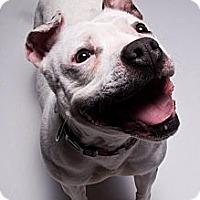 Adopt A Pet :: Florence - Louisville, KY