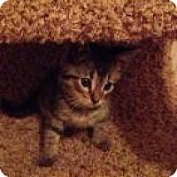 Adopt A Pet :: Jack - Justin, TX
