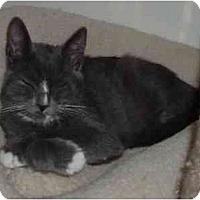 Adopt A Pet :: Jubilee - Davis, CA