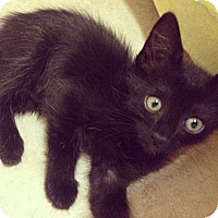 Adopt A Pet :: Blackie - Katy, TX