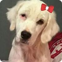 Adopt A Pet :: Ginger G. - Orlando, FL