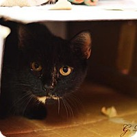 Adopt A Pet :: Sonia - Staten Island, NY