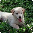 Adopt A Pet :: Milo, Marley, Shiloh