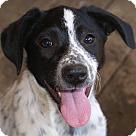 Adopt A Pet :: Stripe