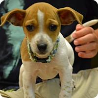 Adopt A Pet :: Tracker - Lake Odessa, MI