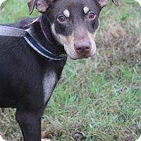 Adopt A Pet :: Rhonda - Waldorf, MD