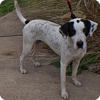 Adopt A Pet :: Chester - Baden, PA