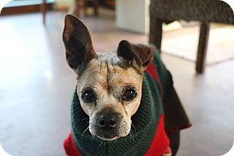 Basenji/American Hairless Terrier Mix Dog for adoption in Creston, California - Apple