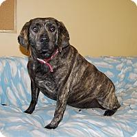 Adopt A Pet :: Elyse - Ridgway, CO