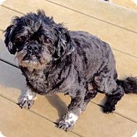 Adopt A Pet :: Bordentown NJ - Dylan - New Jersey, NJ