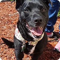 Adopt A Pet :: Penelope - New Oxford, PA