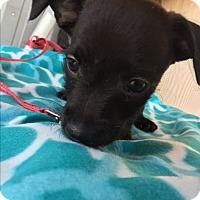 Adopt A Pet :: DORADO - Elk Grove, CA