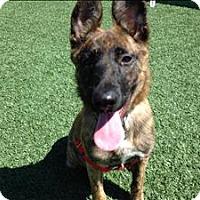 Adopt A Pet :: Fig - San Luis Obispo, CA