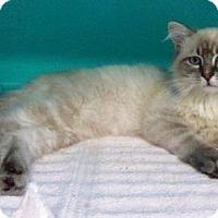 Adopt A Pet :: MIA - Powder Springs, GA